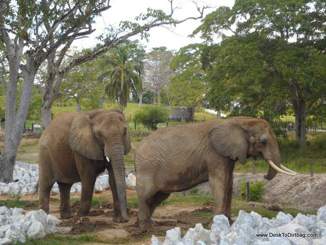 The elephants adjacent to the Museo Africano.