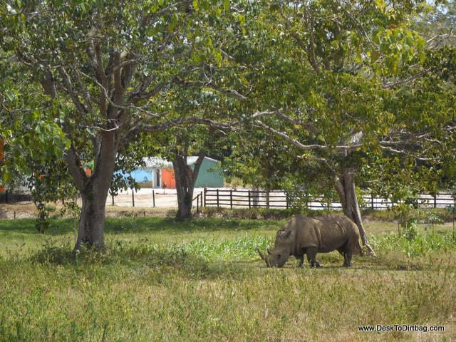 A rhino--it is like going on safari in Africa.