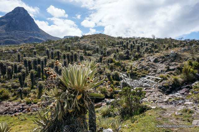 Frailejones scattered all over the area. - Sierra Nevada del Cocuy Colombia