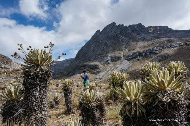Hiking among the frailejones - Sierra Nevada del Cocuy Colombia