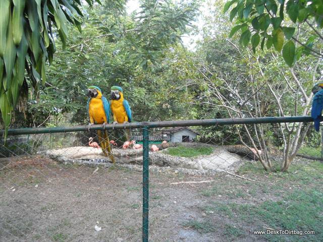 A few parrots hanging around the property for the free food.
