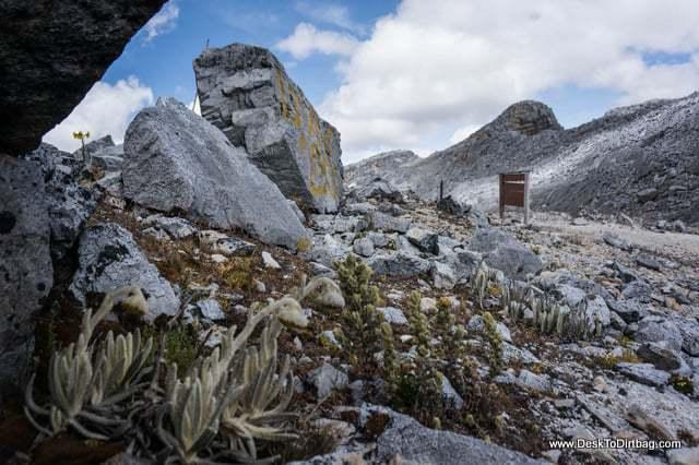 Única vegetación - Sierra Nevada del Cocuy