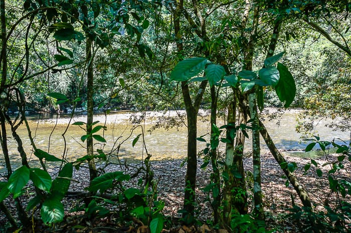 Camping in Colombia's Rio Claro Nature Reserve
