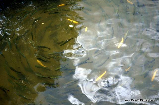 The trout swimming in circles at Truchera Montemar - things to do in jardin colombia