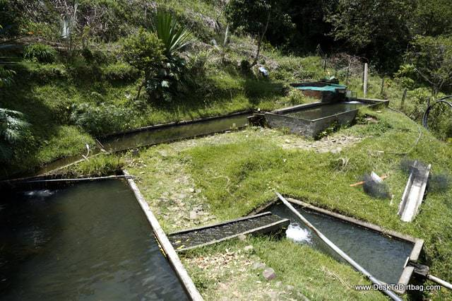 The network of streams and pools to circulate the water for the fish.
