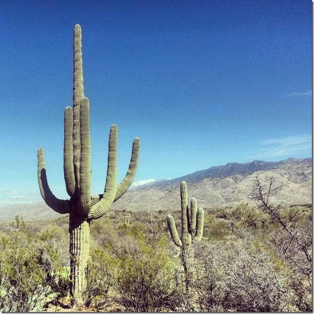 Explore the incredible cacti at Saguaro National Park Arizona