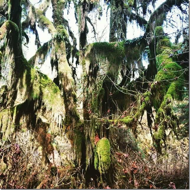 Visit Olympic National Park's Hall of Mosses