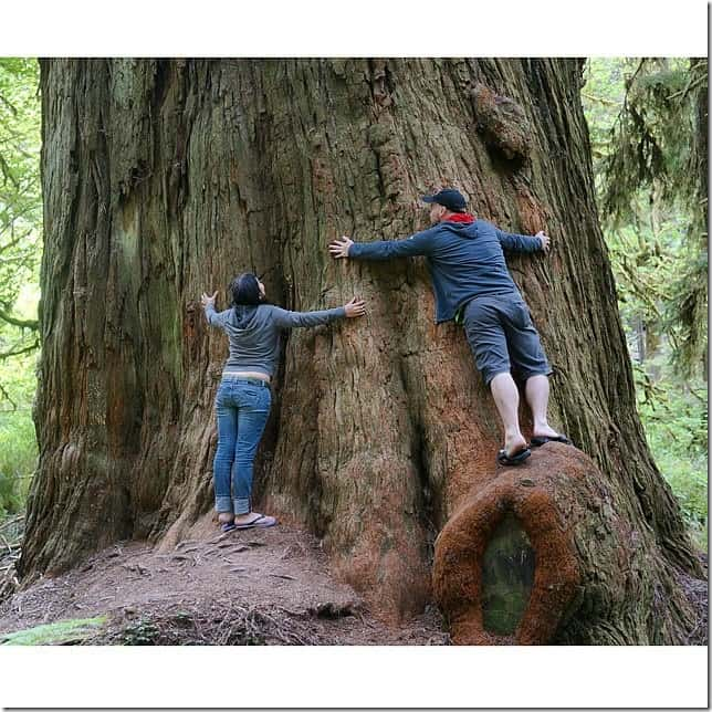 Hug a towering Redwood Tree in Northern California