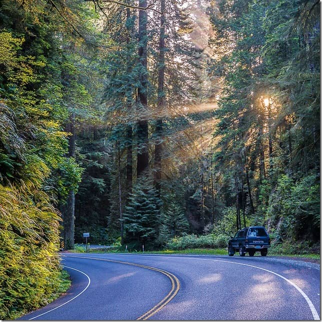Drive through the redwood forests of Northern California