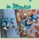 House Sitting in Mexico, Well Off the Grid in Baja California mexico, central-america