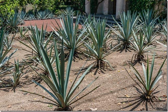 tequila mexico tour-7