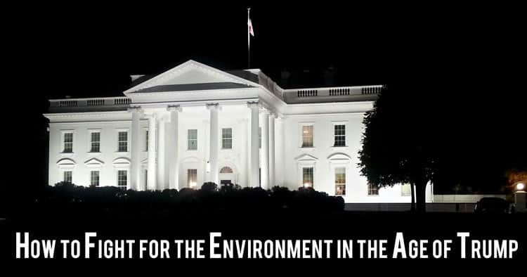 How to Fight for the Environment in the Age of Trump