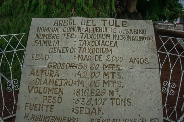 oaxaca mexico-11