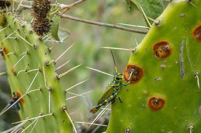 oaxaca mexico-5