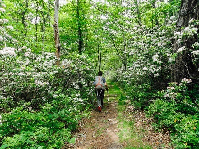 Trout Run Valley - Six Best Places to Go Backpacking in Virginia