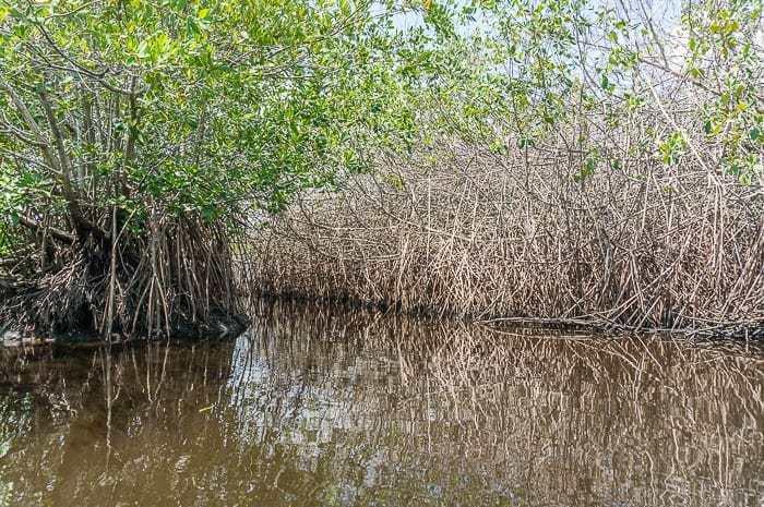 La Ventanilla Mangrove Tour Mexico