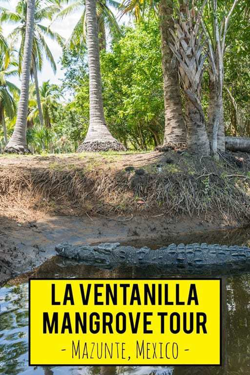 An awesome ecotourism activity near Mazunte, Mexico is the La Ventanilla mangrove tour where you can see lots of wildlife