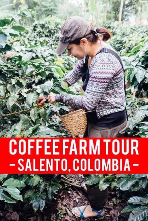 When you sit down at a coffee shop, do you know where your coffee really comes from? Here's what I learned on a coffee farm tour in Salento, Colombia.