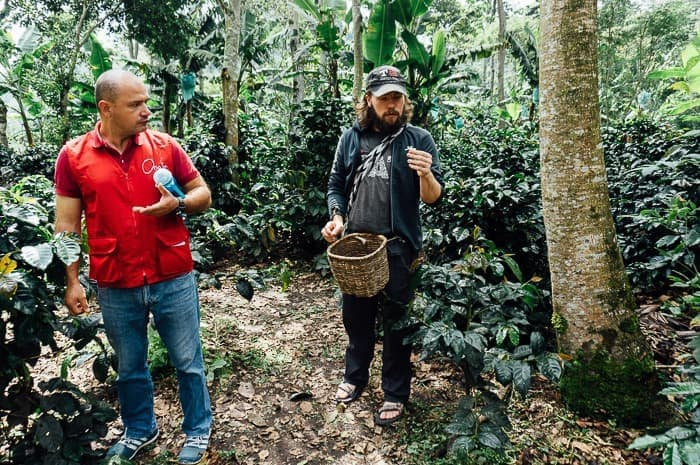 Where Your Coffee Comes From: A Coffee Farm Tour in Salento, Colombia