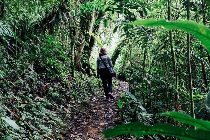 Hiking through small woods - Things to do in Manizales Colombia