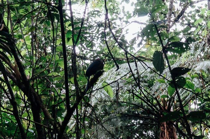 Big fat bird - Things to do in Manizales Colombia