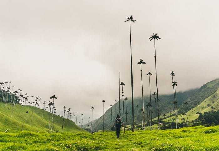 The Cocora Valley - Guide to Traveling to Colombia