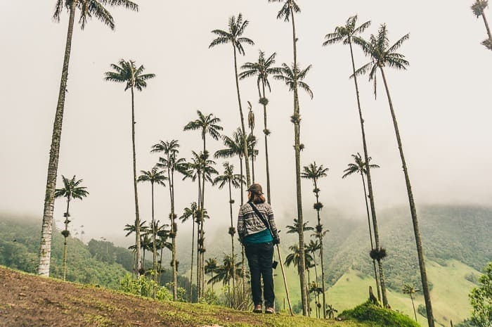 Hiking the Cocora Valley - What to Know Before You Go