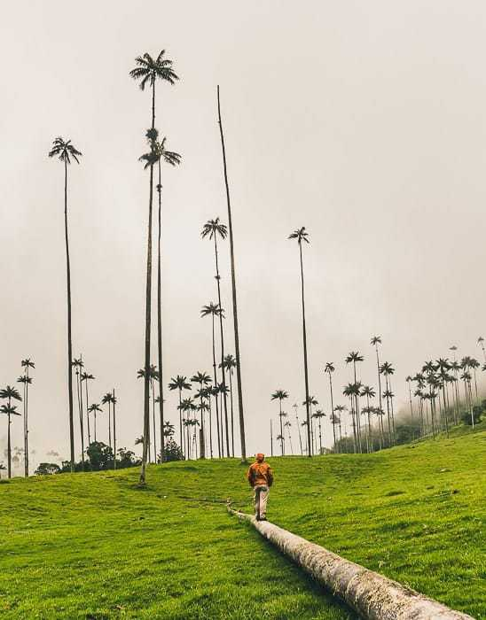 Hiking in the Cocora Valley near Salento, Colombia