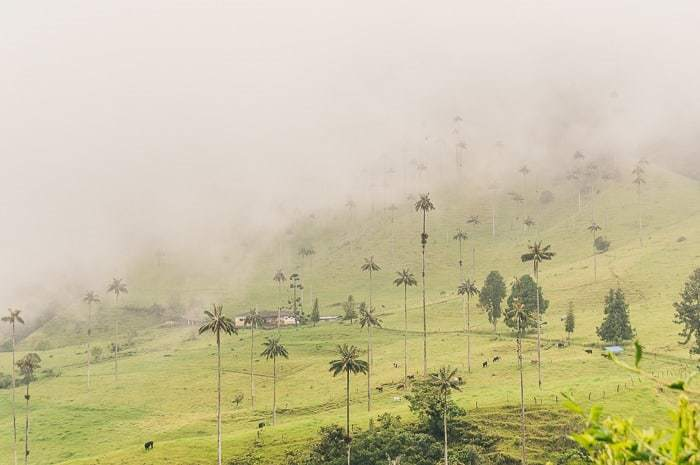 Hiking in Valle de Cocora near Salento, Colombia