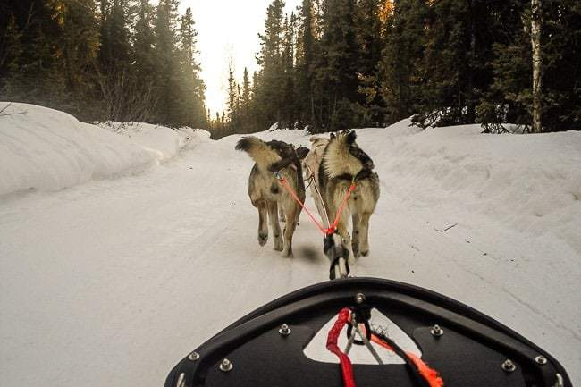 Experiencing Alaska Dog Sledding with Sirius Sled Dogs