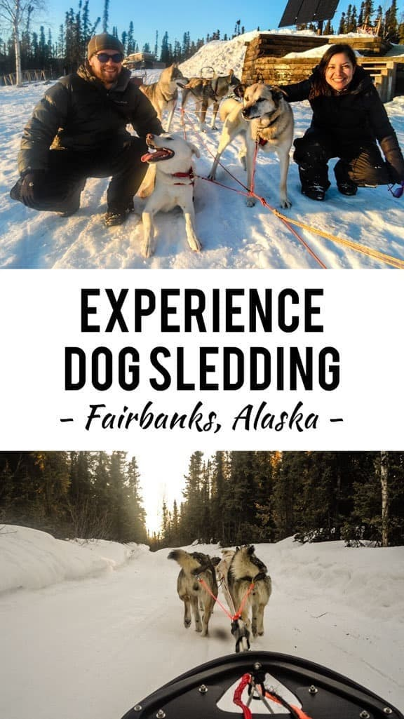 Alaska Dog Sledding with Sirius Sled Dogs