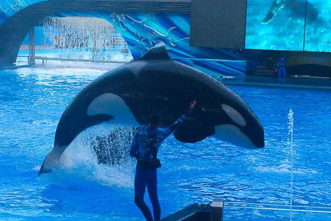 Seaworld orca show - Places to Visit in Orlando Florida