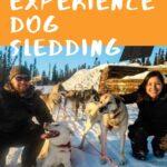 Experiencing Alaska Dog Sledding with Sirius Sled Dogs travel, north-america, alaska