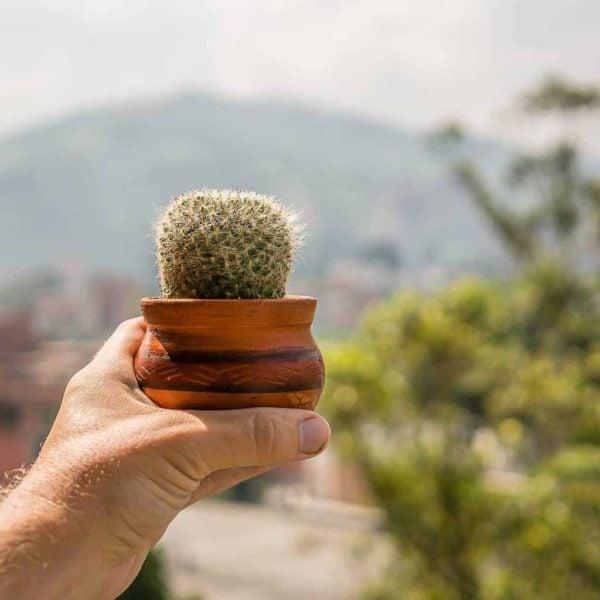 RIP Kurt the Cactus