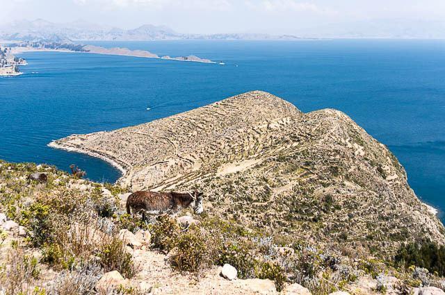 Visiting Copacabana, Bolivia and the Isla del Sol in Lake Titicaca travel, south-america, bolivia