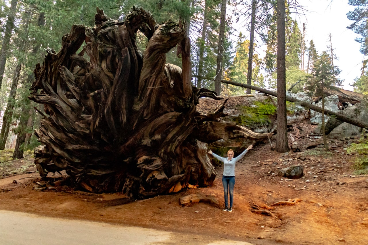best US national parks to visit in spring sequoia NP