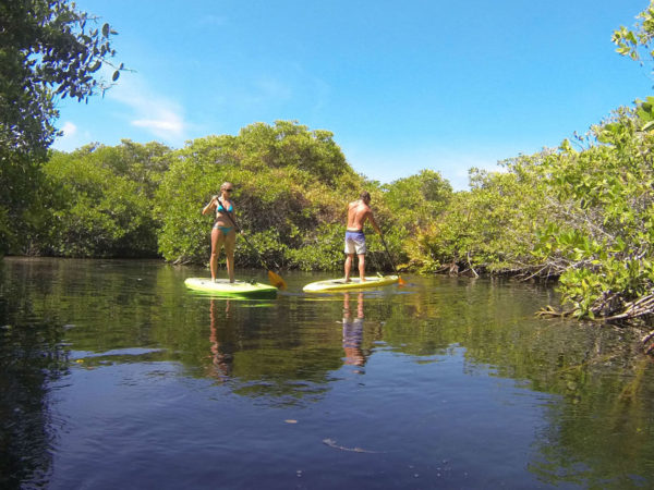 best tulum tours paddleboarding mangroves 02
