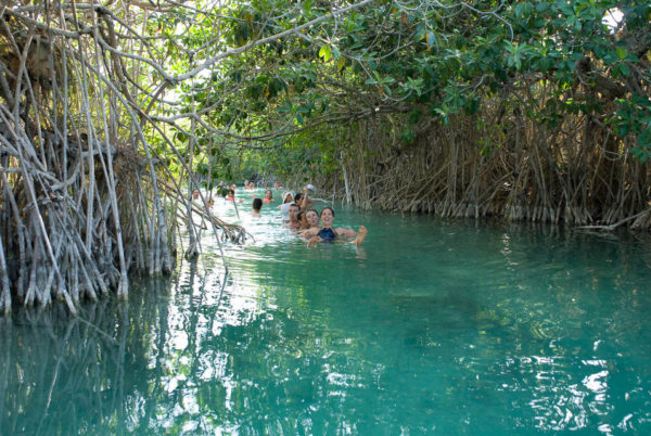 best tulum tours sian ka'an floating through mangroves