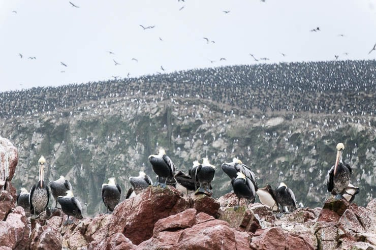 best lima tours paracas ballestas