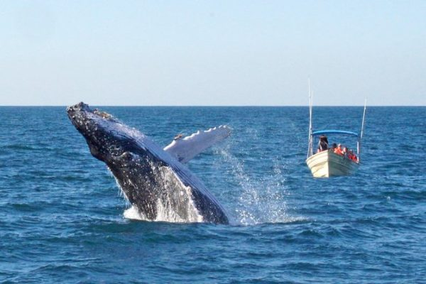 best Mazatlan tours swimming with whales