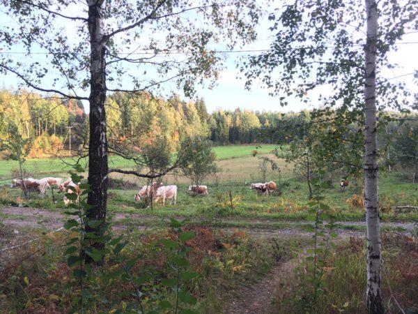 Volunteering Abroad Finland